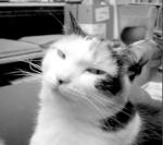 smiling cat Roxie