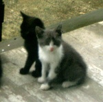 young kittens Midnight & Spencer sitting on the back porch